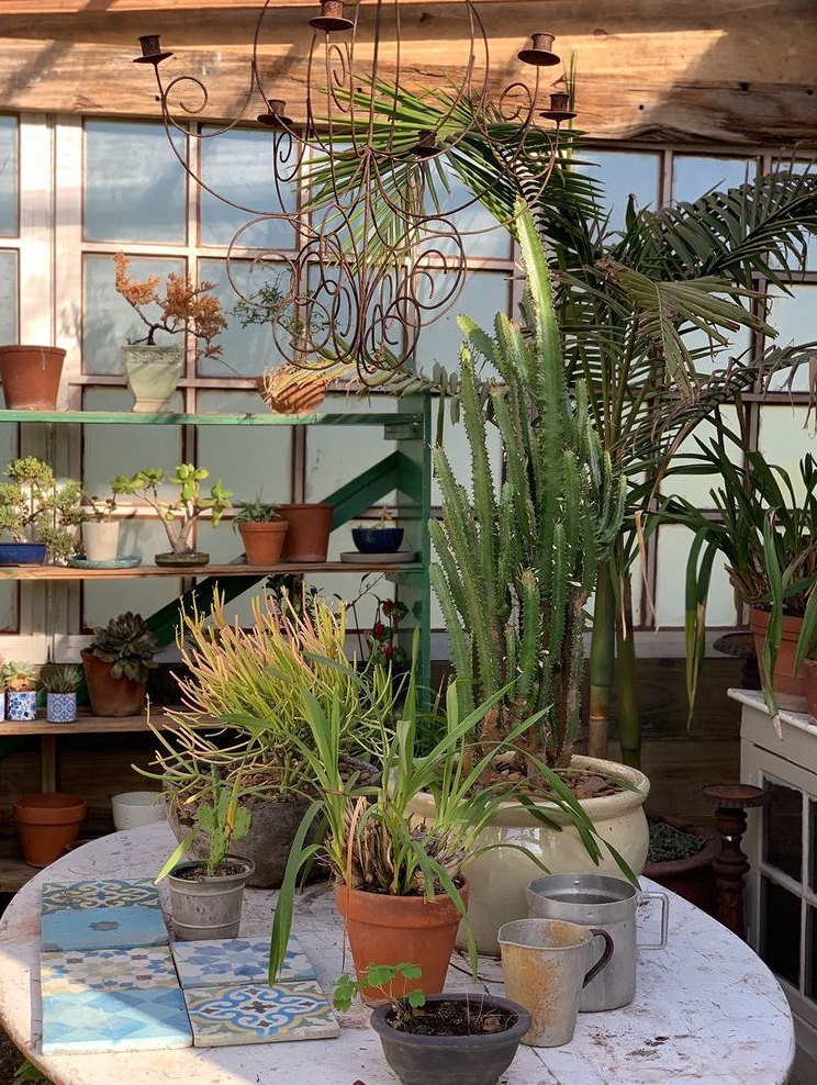 Dear Stella, Tone Alexander, Greenhouse, Interior design