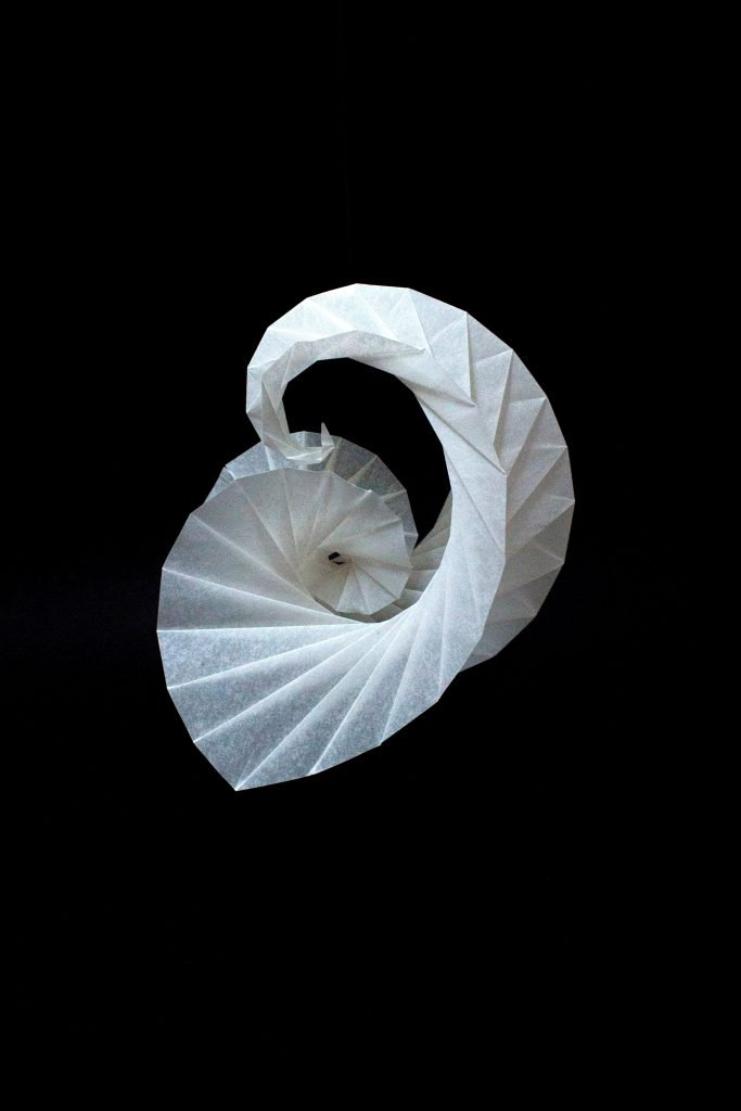 Maia Lehr Sacks, Nautilus, Paper art, Semblance Agency, Pleated paper